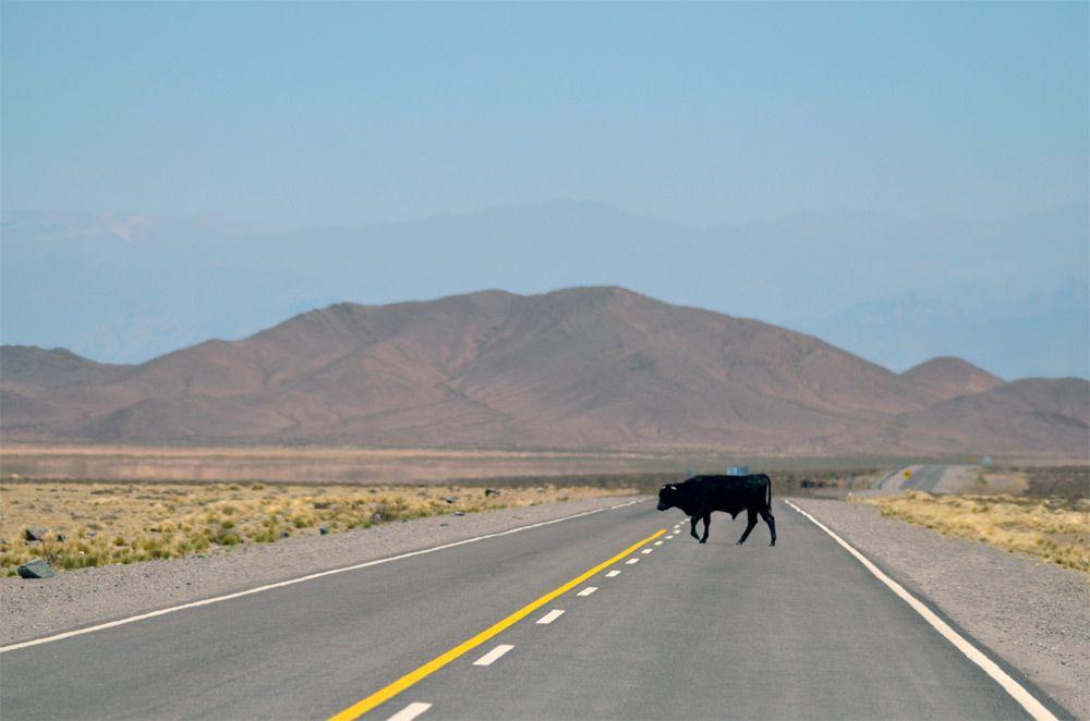 Hasta el rabo, todo es toro. Imagen cortesía de Pexels.